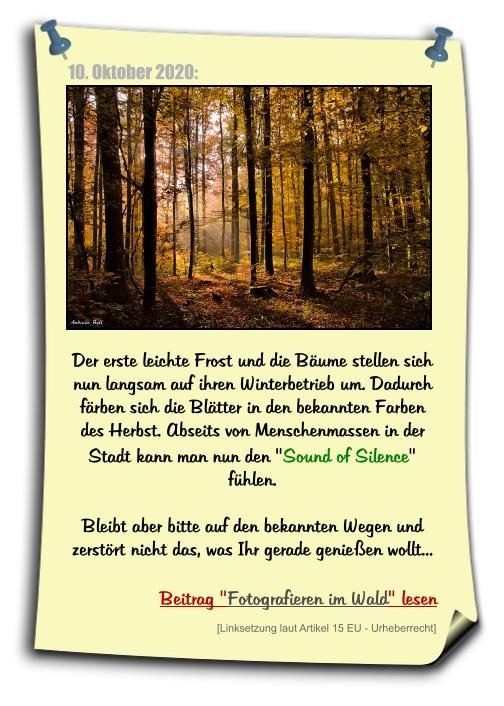 Fotografieren im Wald - Herbstfarben